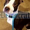 Fallsburg Dog