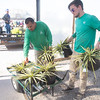 Yucca at TLC Garden Center is one the list of Oklahoma State University's program Oklahoma Proven. The program promotes plants that are well adapted for Oklahoma.