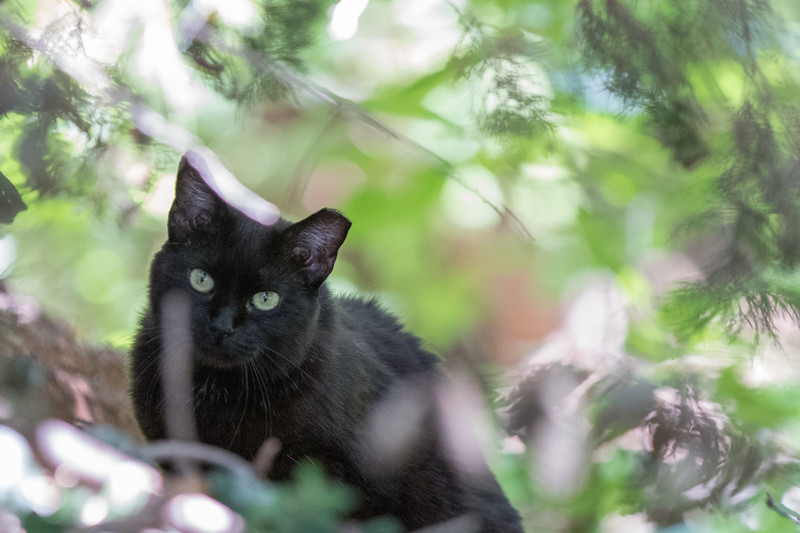 To help control the population of ferral cats the City of Oklahoma City is releasing spayed and nuetered cats that had been previosly captured by animal controll.