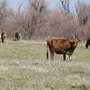 Seperate bills in the Oklahoma House and Senate would allow manicapalities to decide on feedlot operations withing city limits.