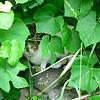 Feral Cat for JA