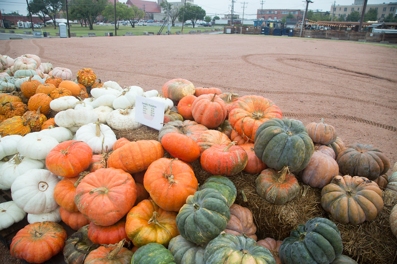 Pumpkins for sale at the Plant Stand located at NW 10th Street and Hudson Ave in Oklahoma City, OK.