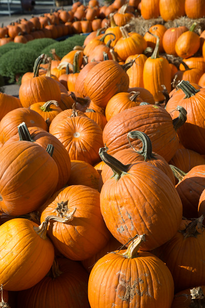 Pumpkins for sale at Under the Sune located at 400 S Bryant Ave in Edmond, OK.