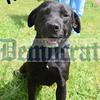 Pets Alive Aug 30, 9 10 11 PM Thor