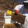 04 11 18 Beekeeping