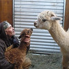 alpacas_and_guy