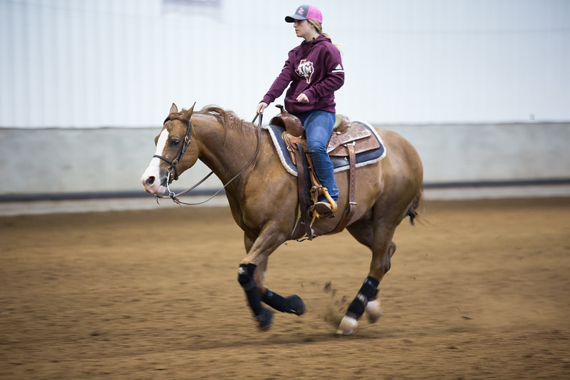 The Prairie Classic Quarter Horse Show is being at the Oklahoma State Fair Grounds in Oklahoma City, OK.