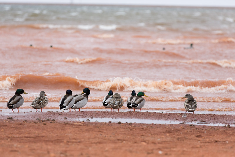 High winds making waves high enough to surf, if your a duck, at Lake Hefner in Oklahoma City.