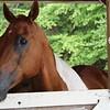 01 24 18 Horse Leader Conference