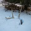 snow-antlers_original