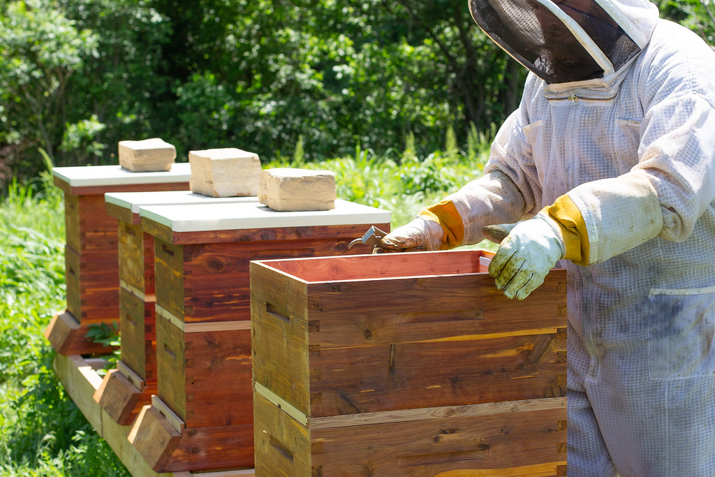 James Lowrey checks bees at the Oklahoma City Zoo's new hives.