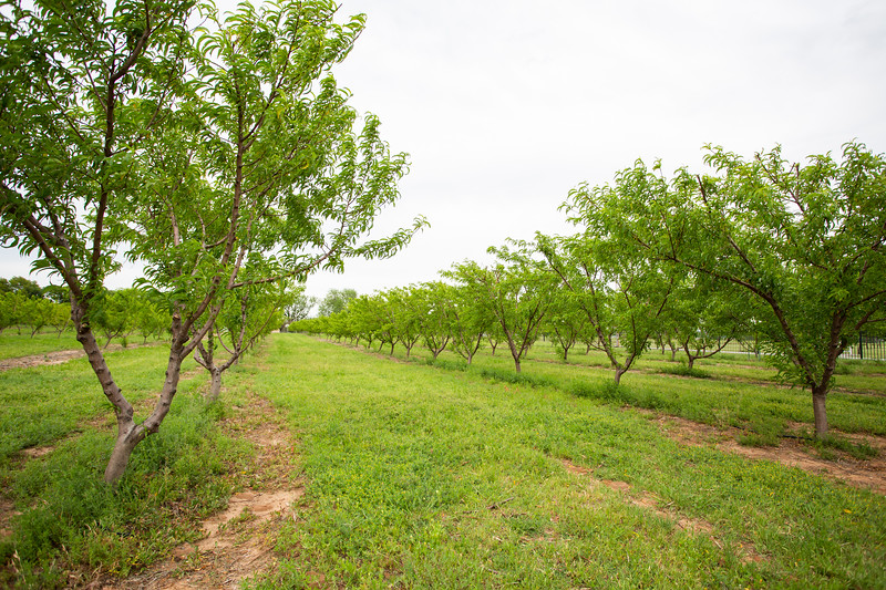 Wind Drift Orchard located at 18499 NE 50th St. in Harrah, OK.