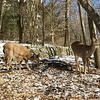 03 04 19 LaBuda deer