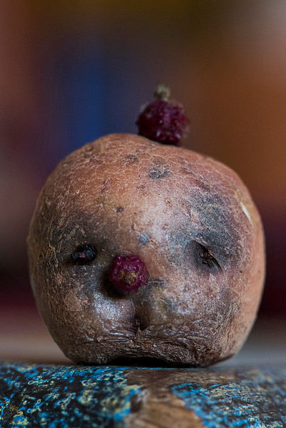 Saddest potato in the universe.  Found this spud in a bag.