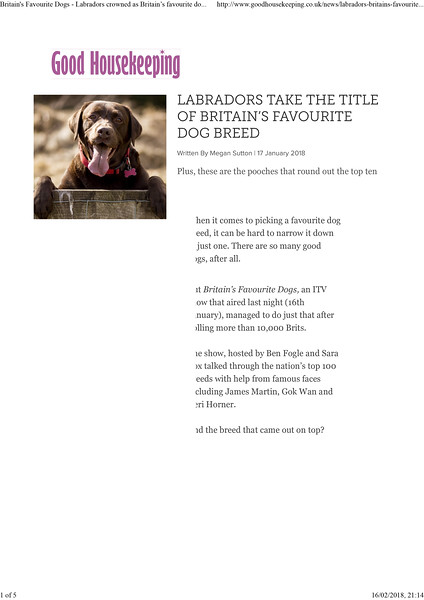Britain's Favourite Dogs - Labradors crowned as Britainâ•Žs favourite dog breed - Good Housekeeping
