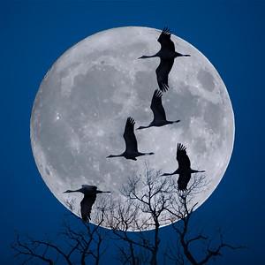 Lunar Landing