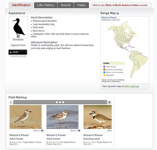 The Cornell Lab of OrnithologyWilson's Plover (all pictured)