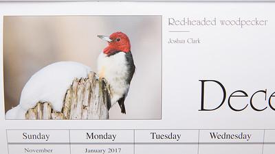 Red-headed Woodpecker2016 Cuyahoga Valley National Park Calendar (December)