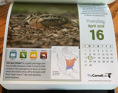 The Cornell Lab of Ornithology 2018 Bird a Day calendarAmerican Woodcock