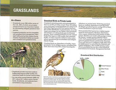 Eastern MeadowlarkBath Nature Preserve, OhioPublished in 2013 State of Birds Report