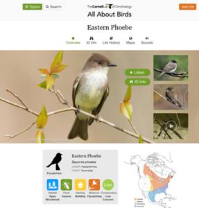The Cornell Lab of OrnithologyEastern Phoebe