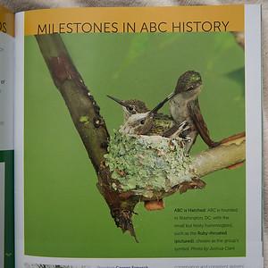 Ruby-throated Hummingbird nestGahanna, OhioPublished in Bird Conservation Winter Issue 2014-2015 (Magazine of American Bird Conservancy)
