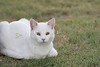 Mixed Breed Cat