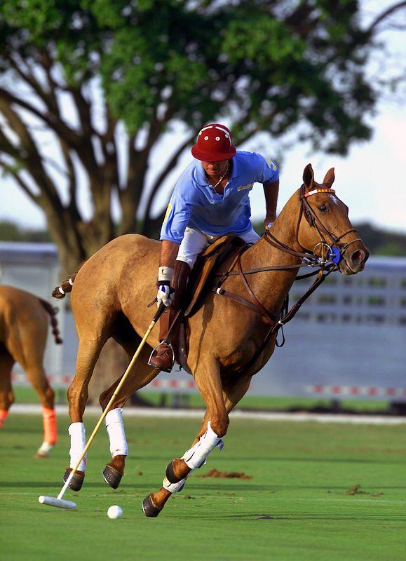 Royal Palm Polo 27 Jan 02 3pm- 185e2