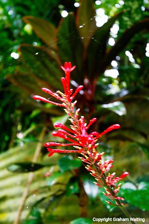 Nature in Puerto Rico