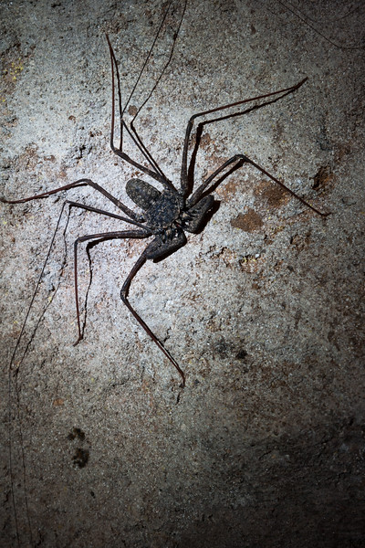 One of the many critters that calls Cueva Clara its home. Hatillo, PR<br /> <br /> PR-070719-0252