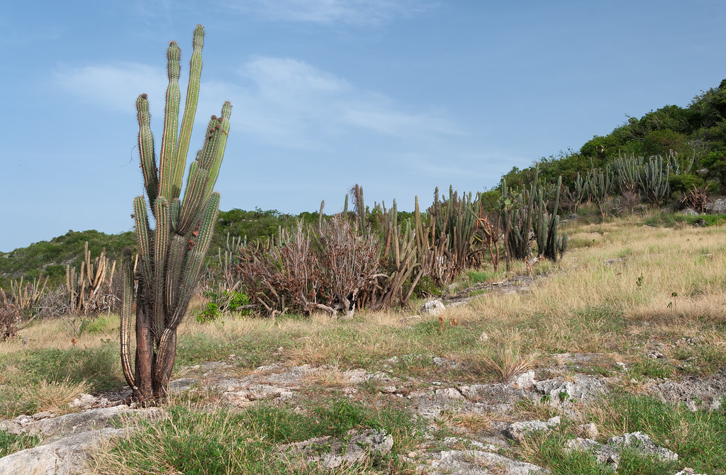Cactus are common in the Dry Forest. Guánica, PR<br /> <br /> PR-070718-0075