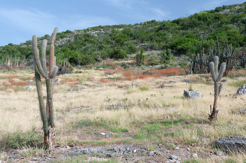 Dry Forest Colors