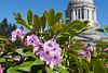 Washington State Capitol 114