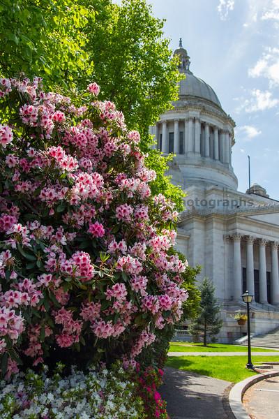 Washington State Capitol 126