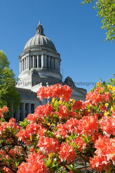 Washington State Capitol 103
