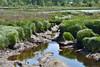 Snohomish River Estuary - Spencer Island Bird Sanctuary  (2-2)