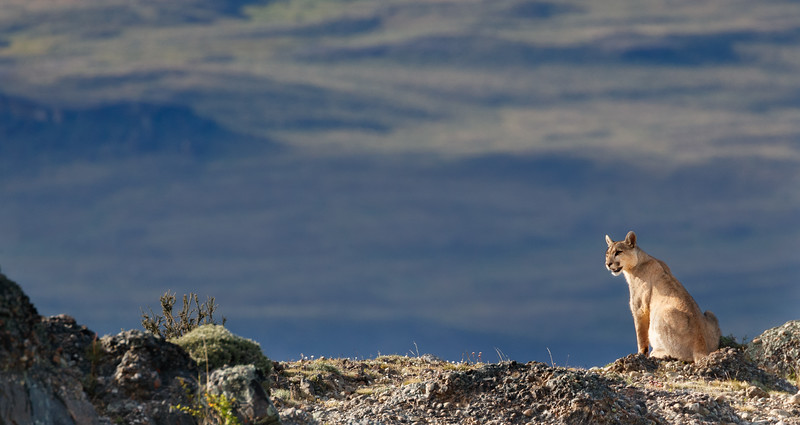 Watching guanacos in the distance.
