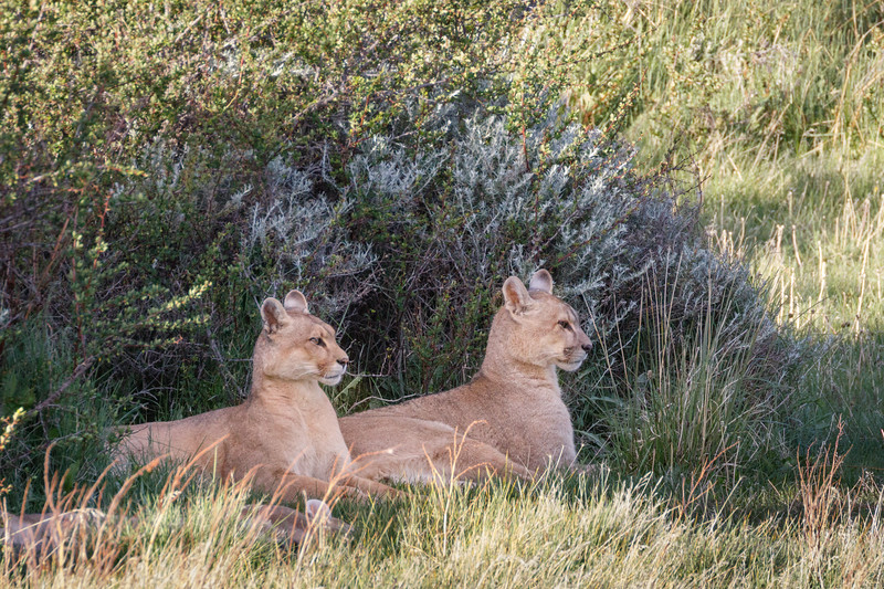 That afternoon we caught up with the family again as they rested in deep shade under a bush.