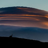 As we descended from the hilltop there were some fantastic lenticular clouds, this one framing a guanaco sentinel.