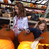 Alessandra Ambrose, 8 and Brooke Ambrose, 4, both of Billerica, work hard to pick out their perfect pumpkin. - photo by Mary Leach