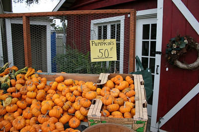 Pumpkin Patch 05
