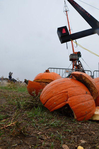 Poor pumpkins, they get slaughtered