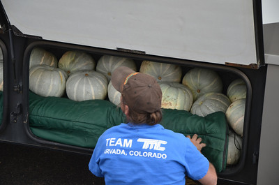 Those are all the pumpkins that Kelli and Sean had to go hand pick for the Punkin Chunkin adventures of Team Inertia2