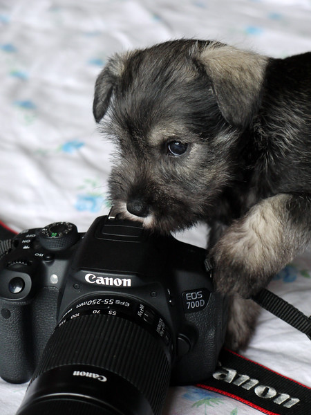 Puppies Born 4th November 2016