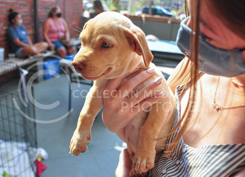 Public Hall and Riley County Humane Society teamed up to host an adoption and fundraising event on August 5th.  Sophomore Katie Painter holds a puppy after participating in the fundraiser. (Aubrey Bolinger | Collegian Media Group)