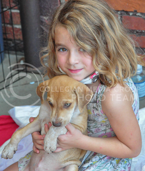 During an adoption and fundraising event through the Riley County Human Society, a girl plays with one of the puppies up for adoption.  The fundraiser took place at Public Hall on August 5th.  (Aubrey Bolinger | Collegian Media Group)