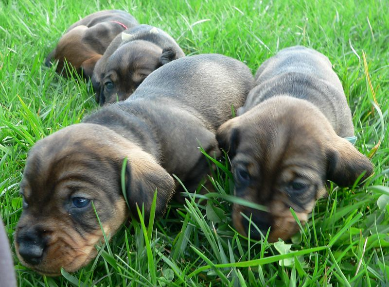 April 29: Puppies are exploring the lawn in front of the house.