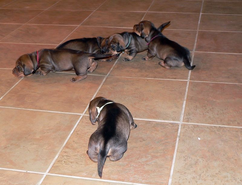 April 27: The pups look good. They are laid back and take new experiences in stride.