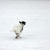 part greyhound!