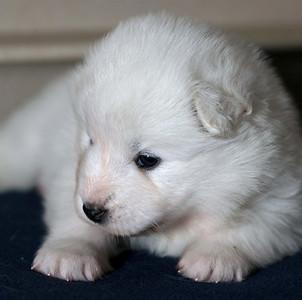 Buckroe Puppies